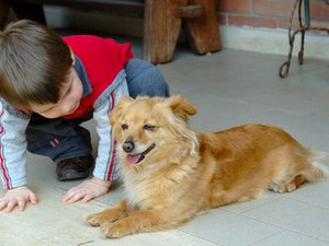 How to Kill Fleas on Dogs Organically