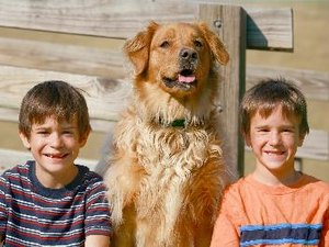 The Best Medium-Sized Dogs That are Good with Children