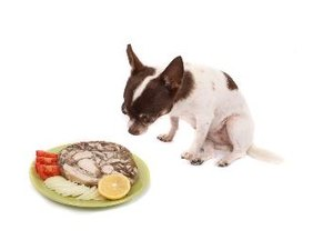 Preferred Diets for a Chihuahua