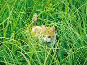 Can Cats Eat Ornamental Grass?