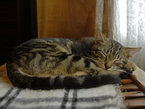 Do Cats Experience Deep Sleep?