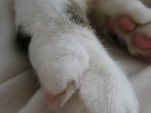 What Does It Mean When a Kitty Comes & Taps You With Its Paw?