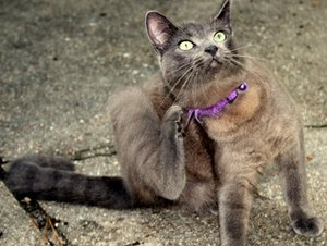 What Causes Mange in Cats?