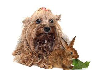How to Add Fiber to a Cairn Terrier's Diet