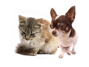 What Kinds of Intestinal Parasites Do Cats & Dogs Transmit?