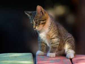 Why do kittens lick and bite