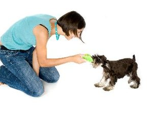 How To Stop Dogs From Scratching The Carpet Pets