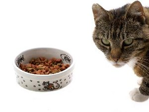 How to Feed a Pet Cat