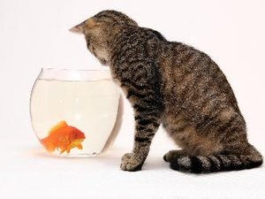 How to Keep a Cat Out of the Aquarium