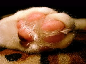 Cat Toenail Infections
