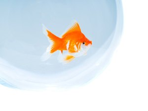 Can You Use Marbles at the Bottom of a Goldfish Bowl?