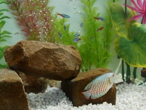 What Kind of Plants & Decorations Do Tetras Like?