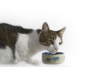 Suggested Feeding for a Cat