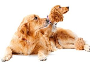 Acidophilus for Dogs