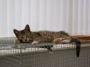 Cat Kennel Ideas