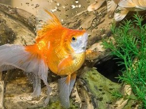 Why Does the Water Turn Yellow in a Fish Aquarium?