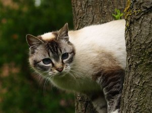 How to Get a Cat Out of a Very Tall Tree