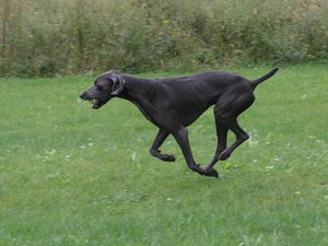 The Best Dog Breeds to Run With