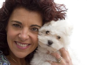 About Bichon Poodles