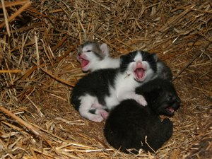 How to Take Care of Premature Newborn Kittens