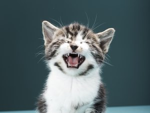 What Causes a Cat to Scream for No Reason?