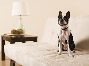 How to Clean Dog Hair off of Sofa Fabric