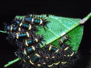 Natural Insect and Disease Control for the Organic Gardener
