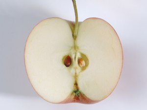 Are Apple Seeds Digestible?