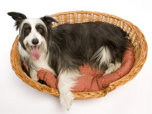 How to Clean an Extra-Smelly Dog Bed