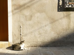 Heatstroke Symptoms in a Cat