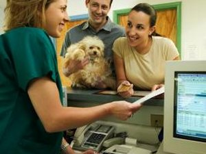 What Is a Veterinarian Technologist?
