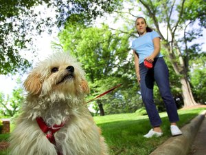 How to Stop Pulling With a Dog Harness