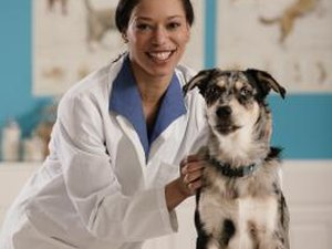How Much Does a Veterinary Technician Make?