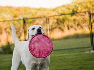 Types of Wire Fencing for Dogs