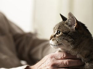 Can You Take Your Cat Home After You Have It Euthanized?