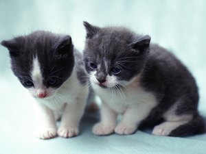 What Can Kittens See After Opening Their Eyes?
