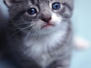Eye Inflammation in Kittens
