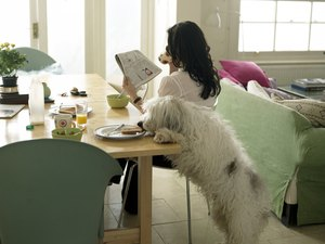 Dog Behaviors Caused by Food
