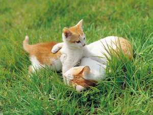 Is Eating Grass Bad for Cats?