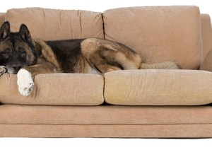 how to keep dog off couch when away