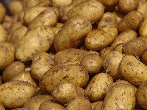 Phosphorus Level of Potatoes