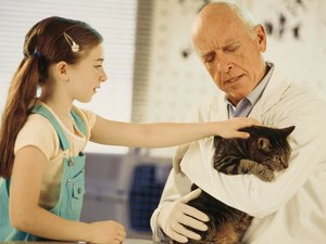 Seizures in Old Cats