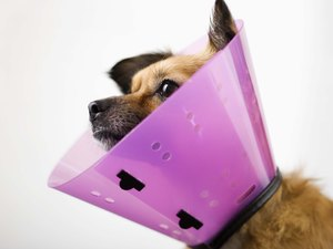 How to Keep Dogs From Reinjuring Themselves Again