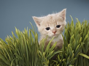 How to Get Kittens to Stop Digging in Your Houseplants