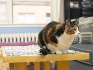 Methimazole for Cats & Vomiting