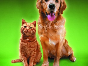 The Advantage of Having a Dog Vs. a Cat for a Pet