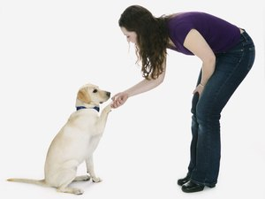 Teaching Your Dog How to Give High Fives