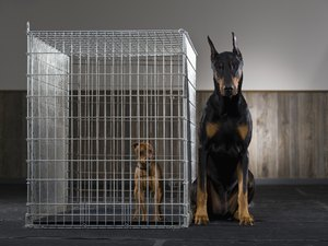 The Proper Cage Sizes for Adult Dogs