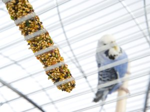 How to Get My Parakeet to Eat Fresh Fruit & Vegetables When He Only Eats Seeds