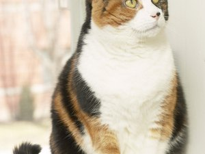 A Cat's Behavior With Separation Anxiety
